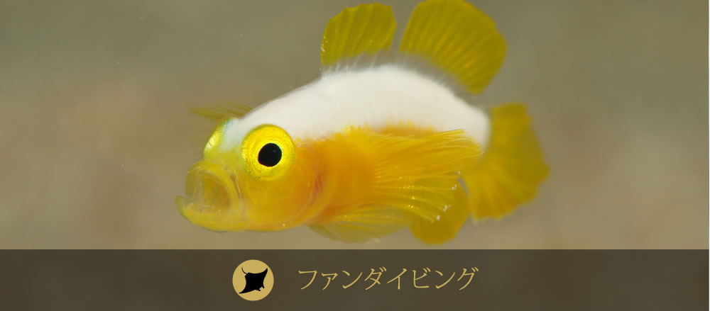 石垣島ファンダイビング
