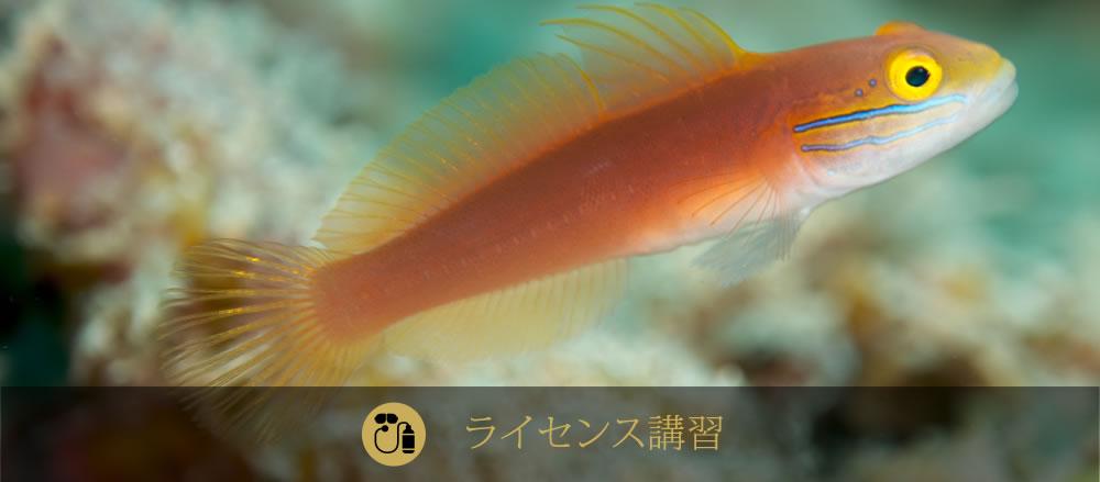 石垣島ダイビングライセンス講習