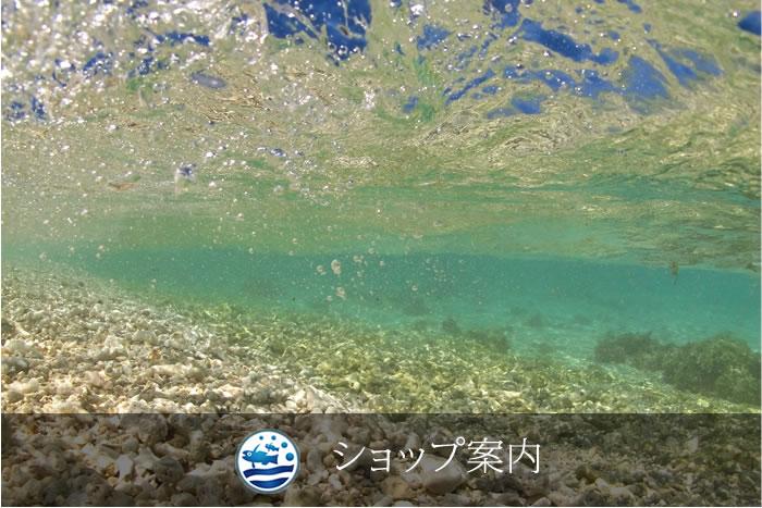 石垣島ダイビングショップ