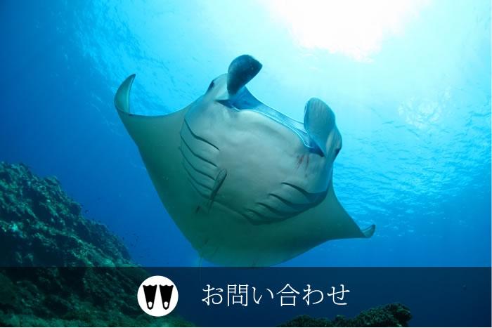 石垣島ダイビング問い合わせ