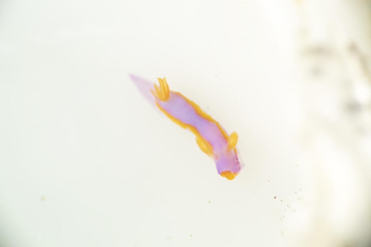 石垣島マクロダイビング