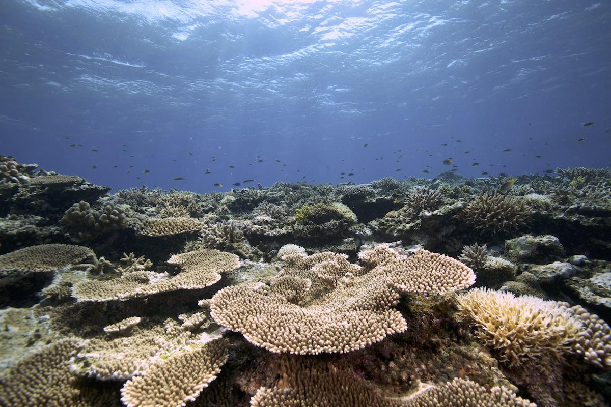 石垣島サンゴ礁ダイビング