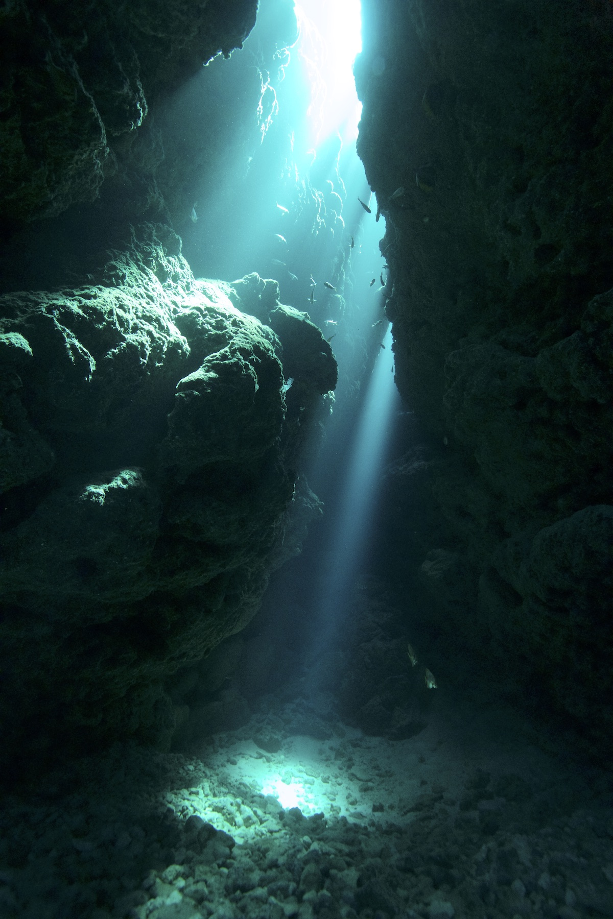 石垣島ワイドダイビング