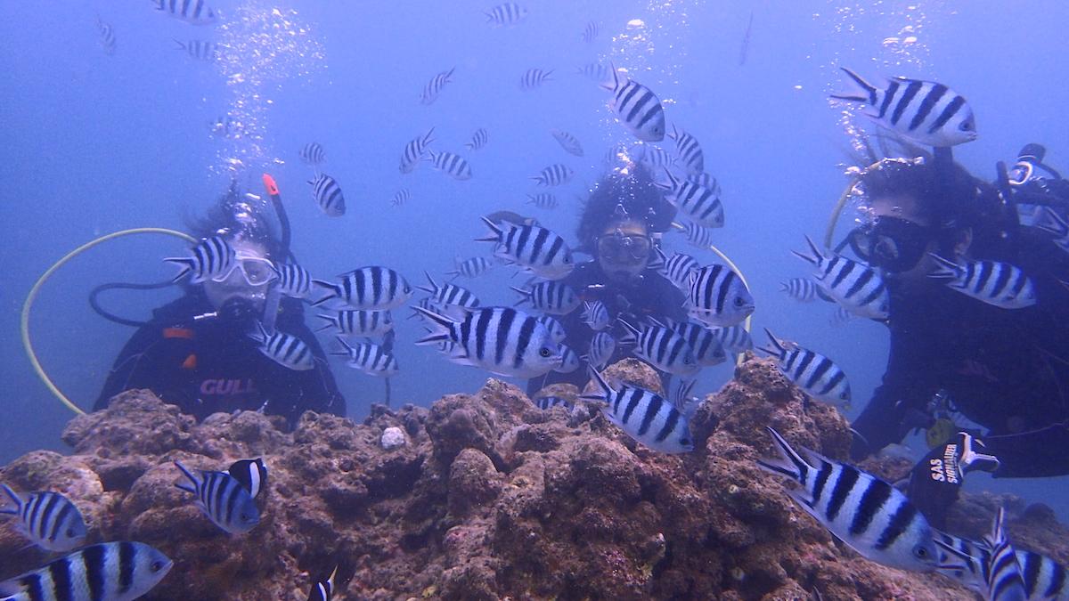 石垣島体験ダイビング