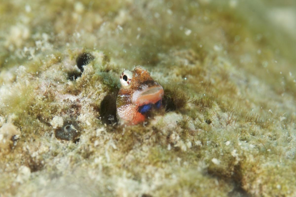 石垣島のんびりダイビング
