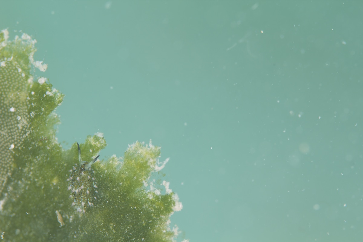 石垣島ウミウシダイビング