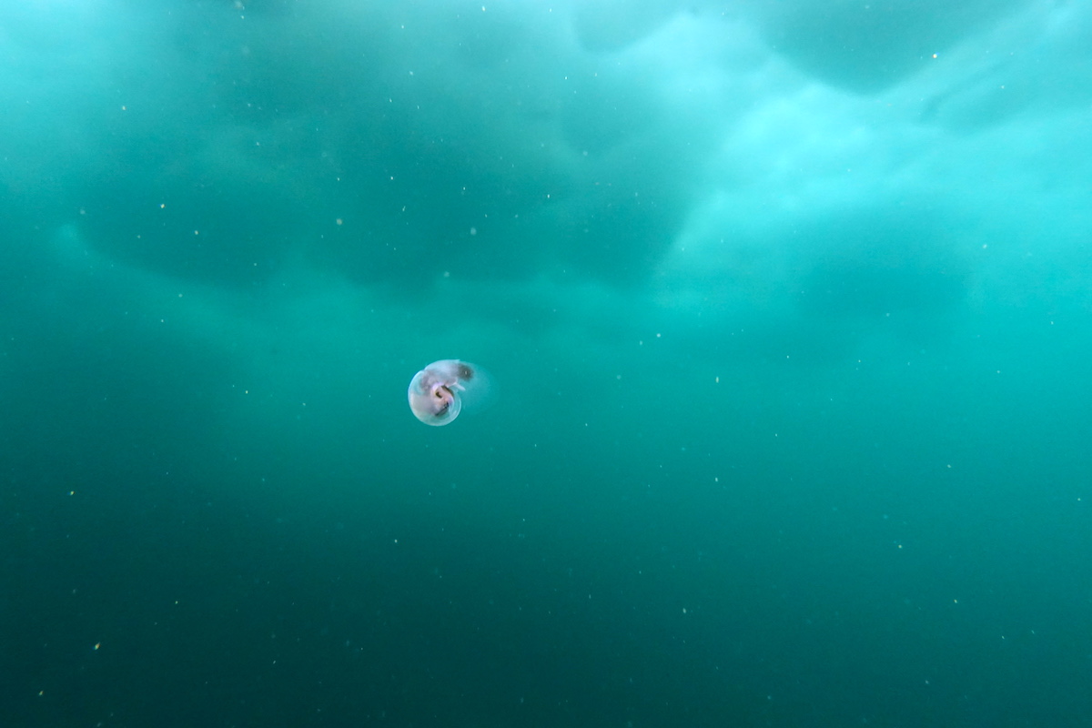 世界遺産の海