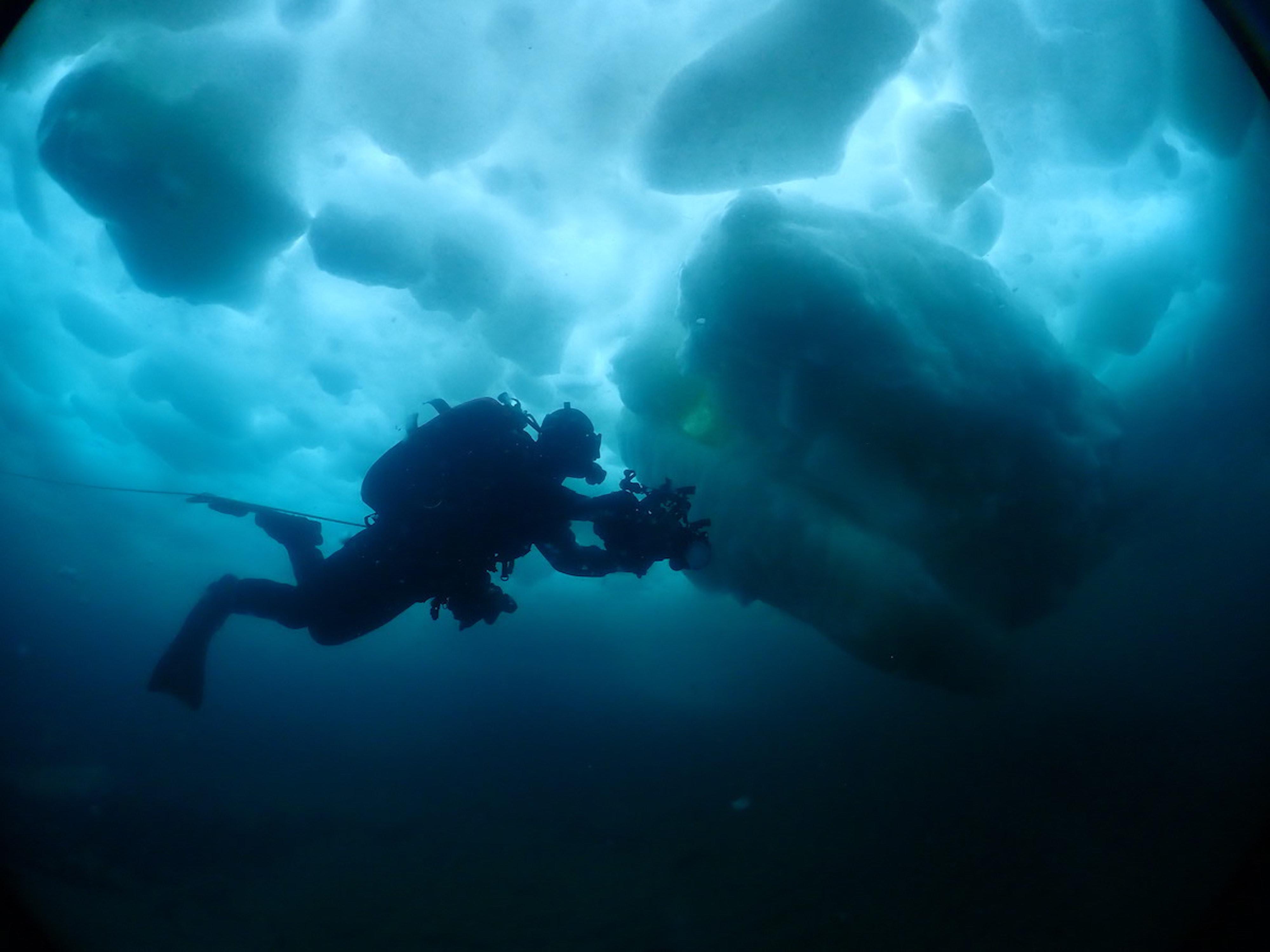 流氷ダイビング