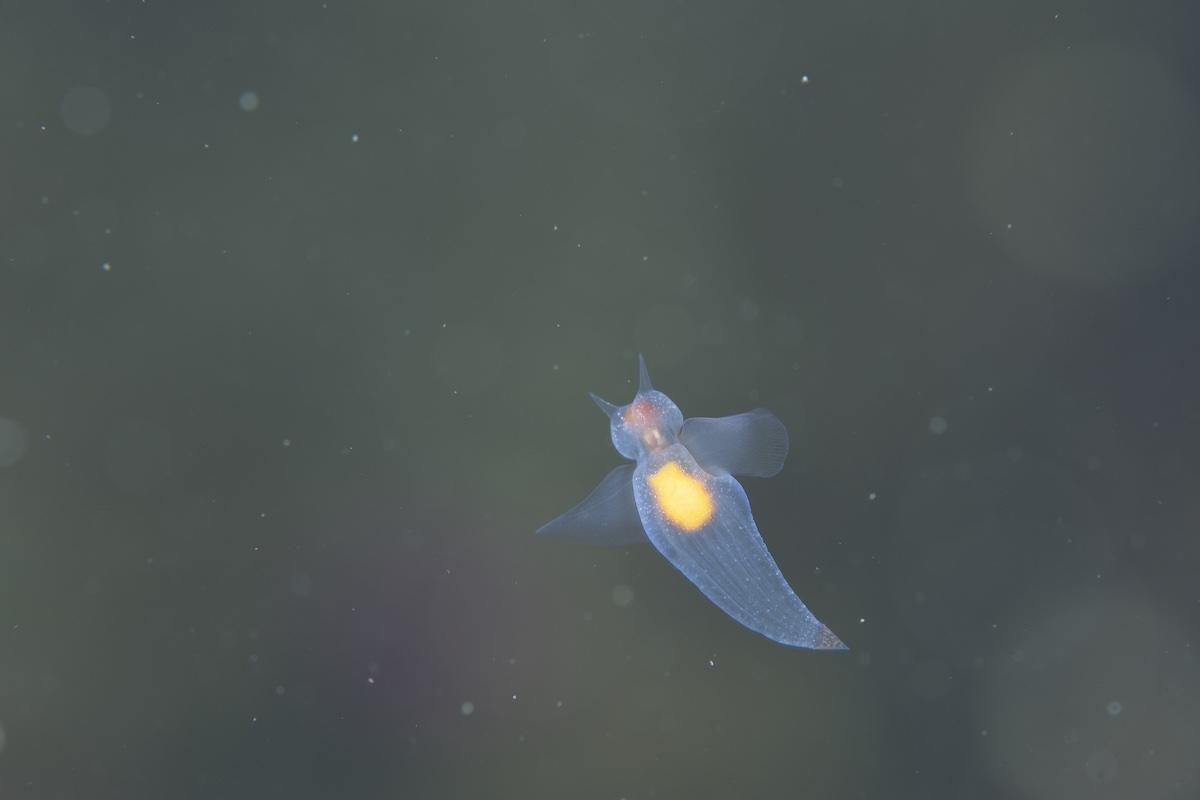 石垣島少人数性ダイビング